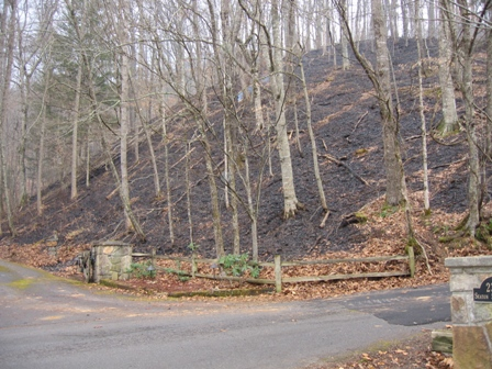 Fire damage on Shields Mountain - Spring 2007